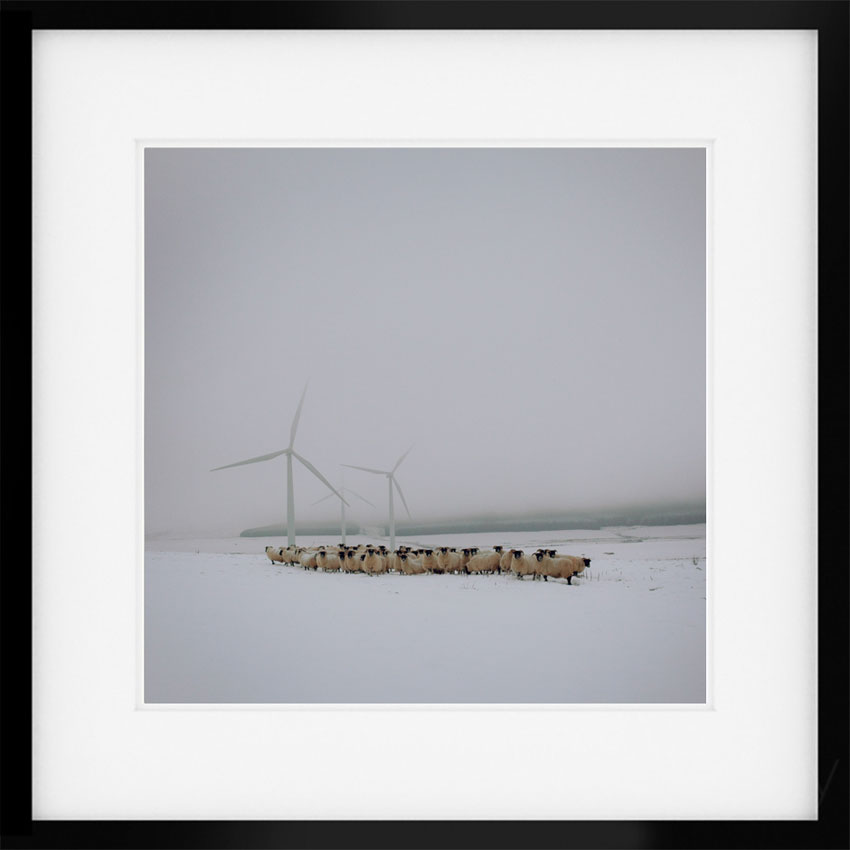 Blackfaced Ewes with Wind Turbines, Lauder, Scotland, January 2013. From the series Drawn To The Land. 8″ x 8″ Signed Digital C-Type print in a limited edition of 50. £125 plus P&P © Sophie Gerrard all rights reserved.